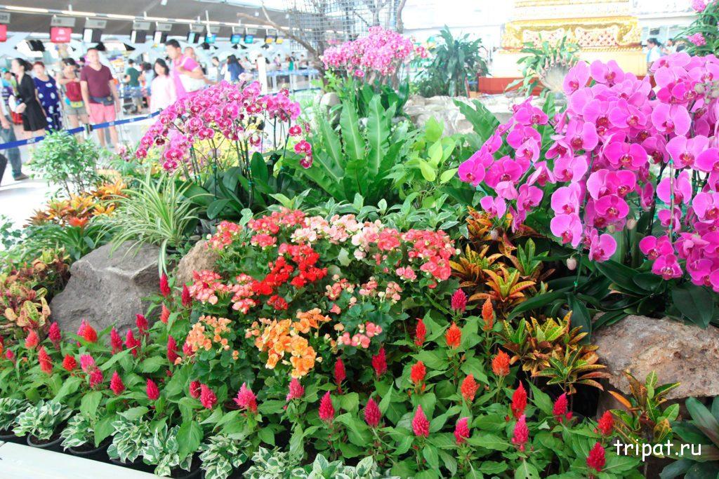 растительность Таиланда
