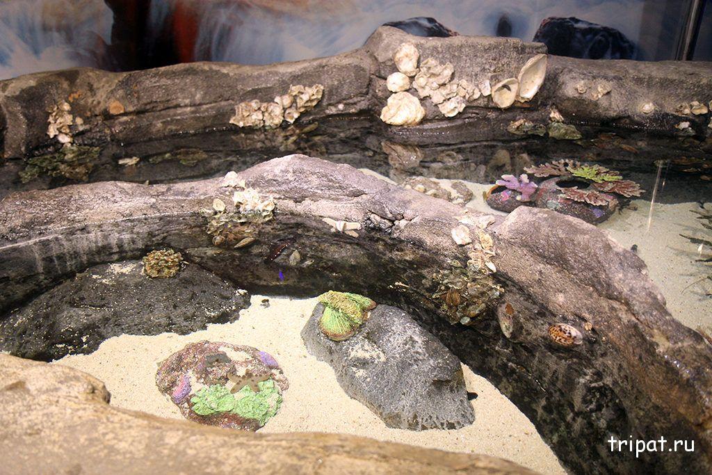 ракушки в аквариуме
