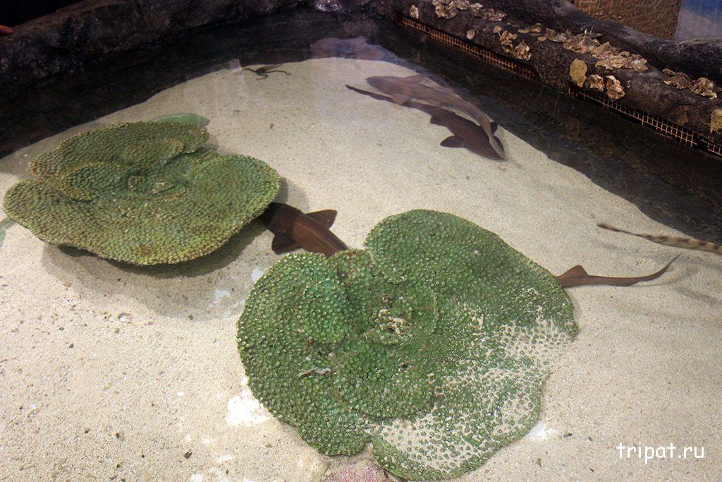 рифовые акулы