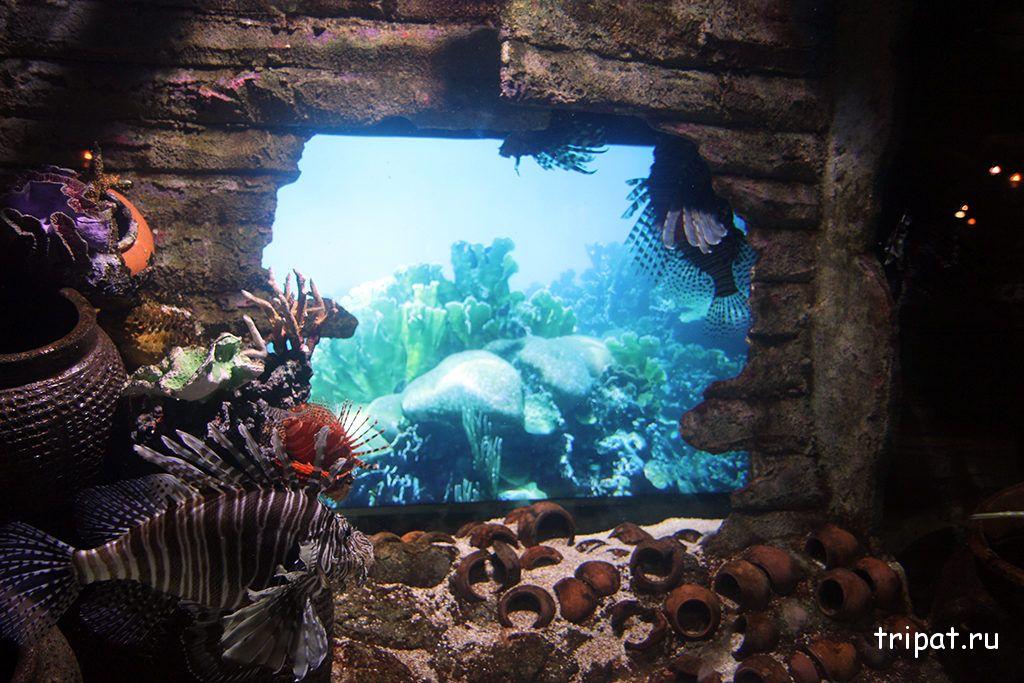 интересные морские обитатели