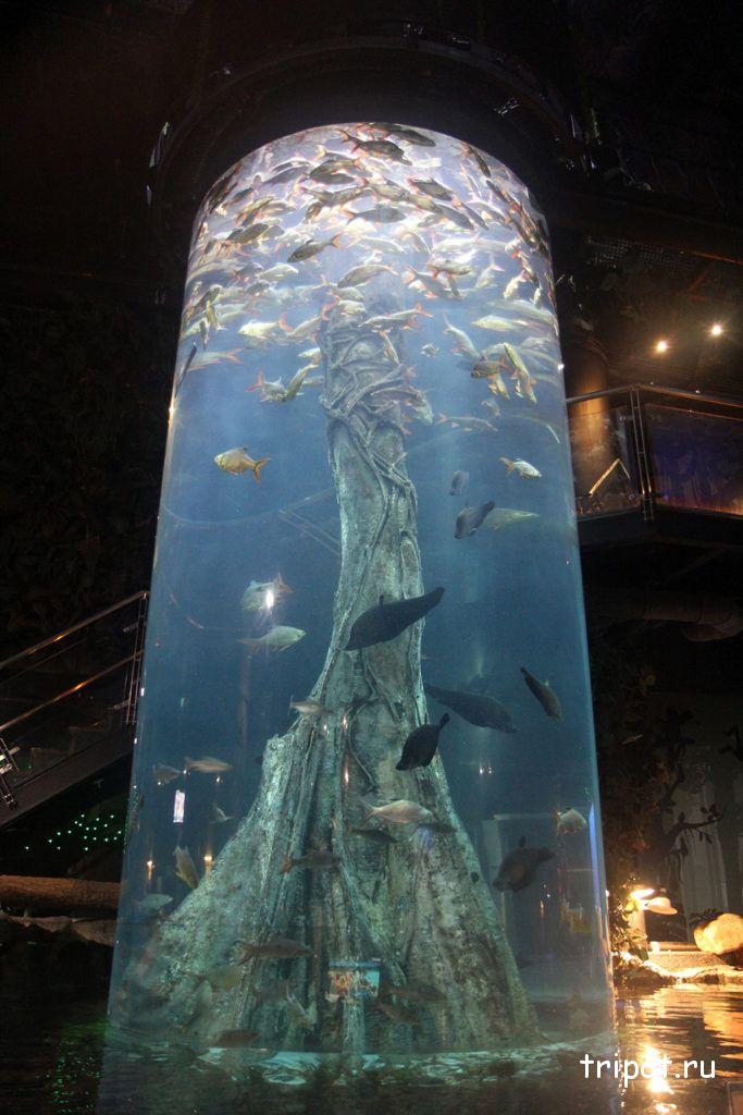 колба с рыбами