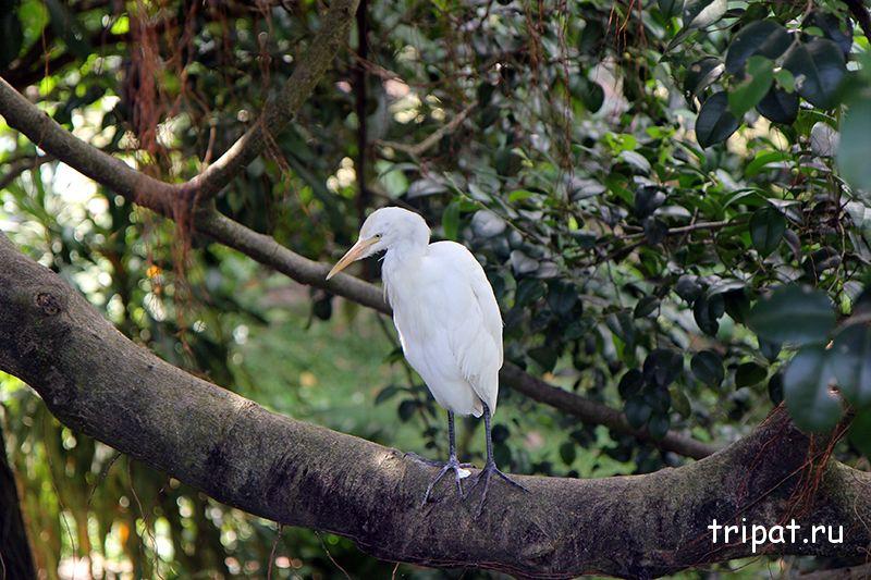 белая птица на перилаХ