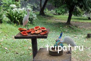 кормление птиц фруктами