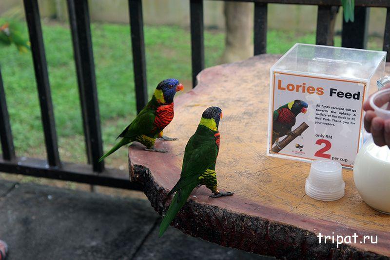 попугаи сколько стоит покормить