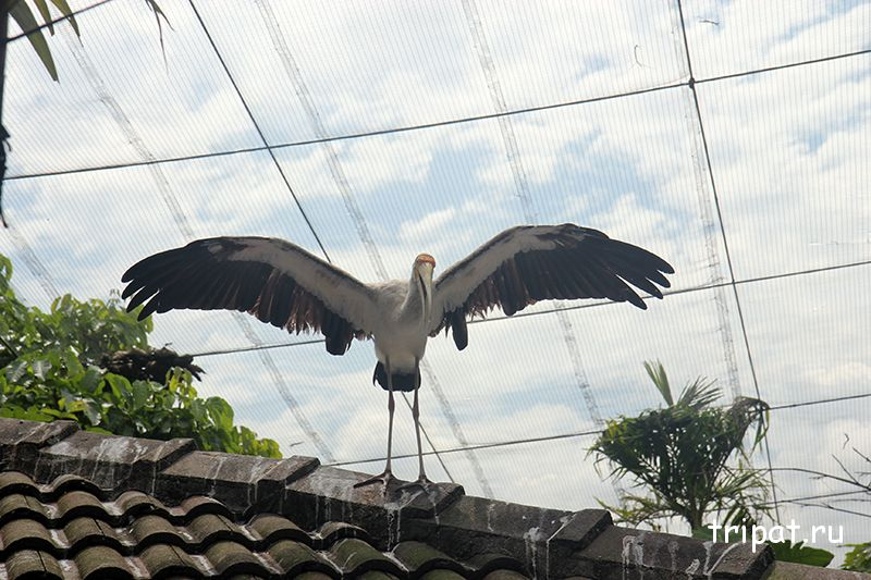 цапля на крыше