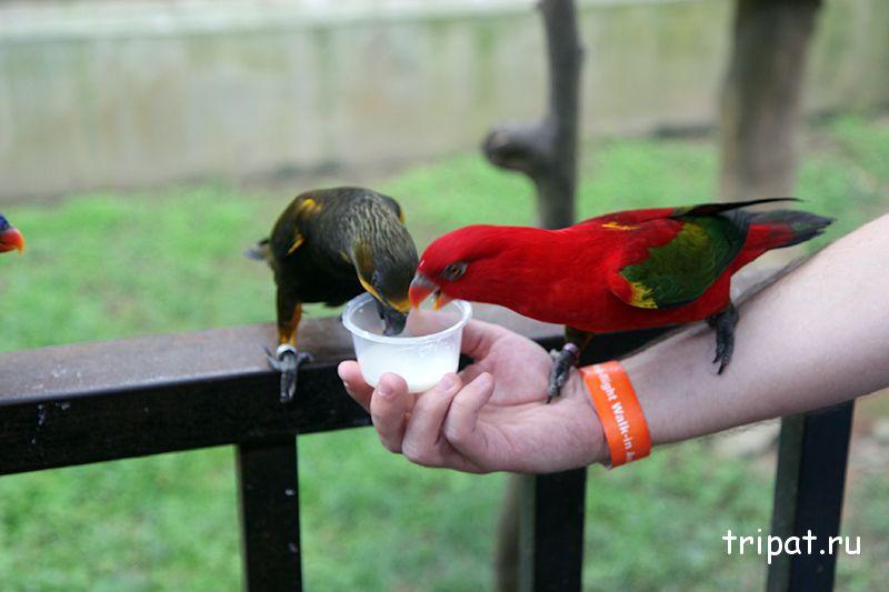кормление попугая