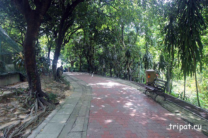 прогулочная дорога по парку