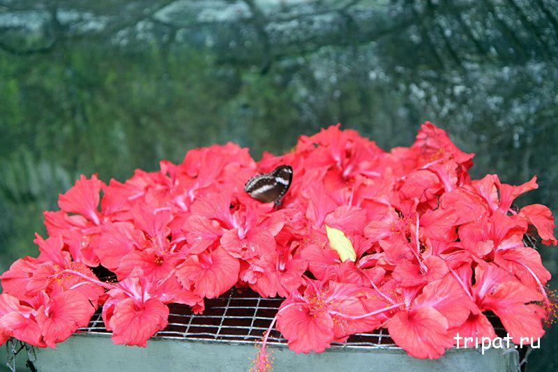 сетка с цветами дял бабочек