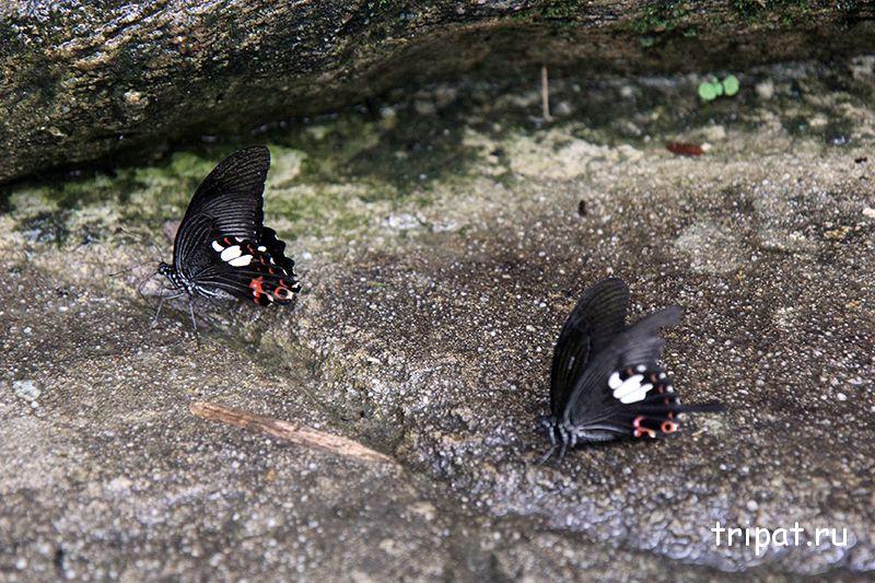 бабочки на дорожке