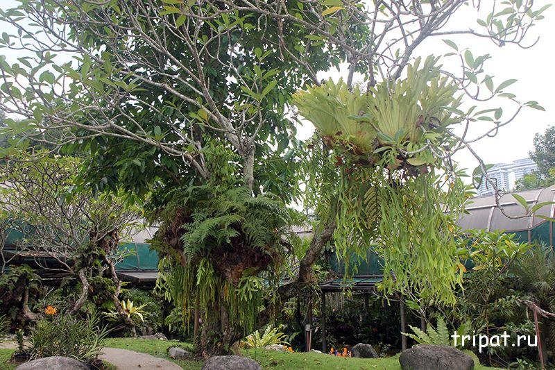 великолепное дерево с цветами