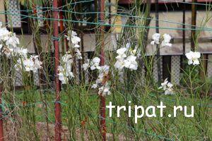 сад орхидей Куала-ЛУмпура
