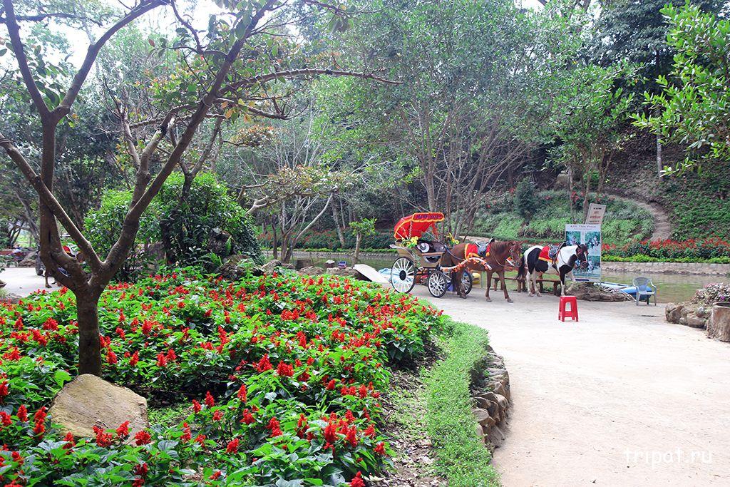 клумба цветов и лошадь