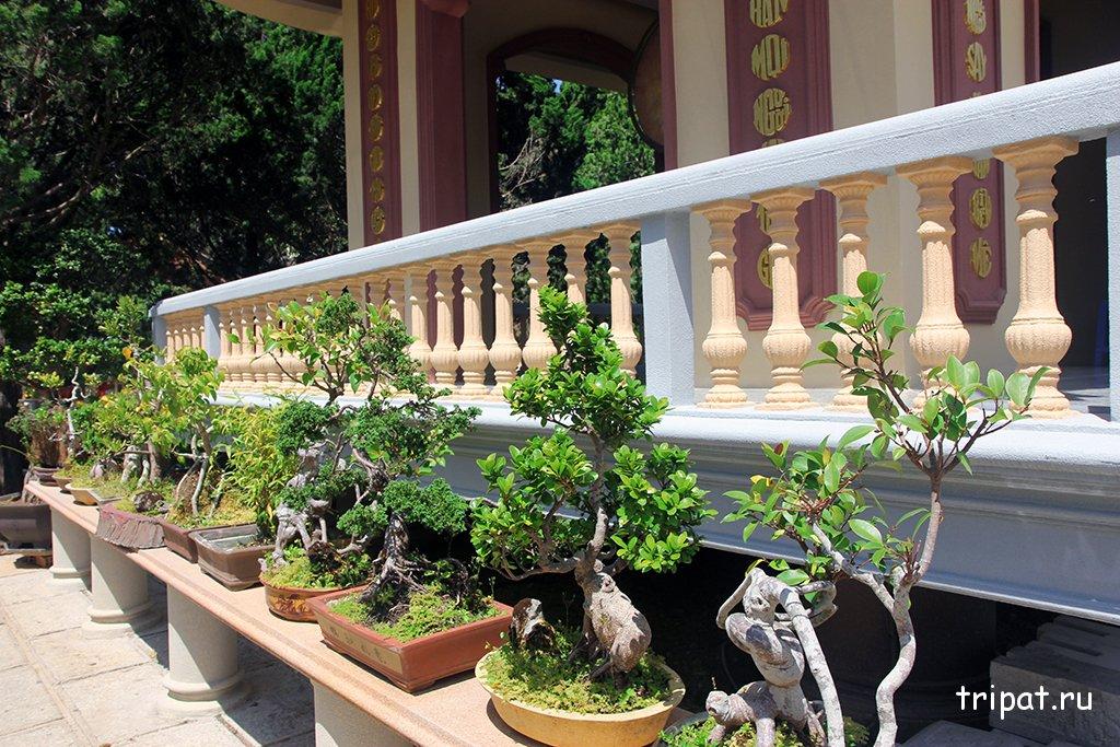 Растения с боку от беседки