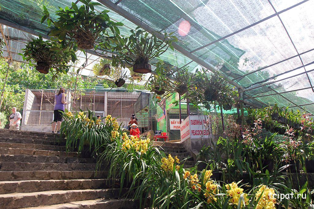 лестница с орхедеями