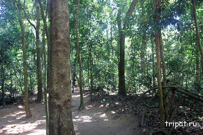 С виду просто лес
