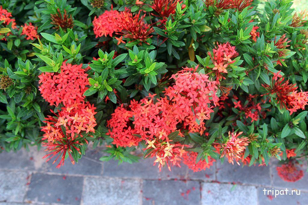Милые цветы