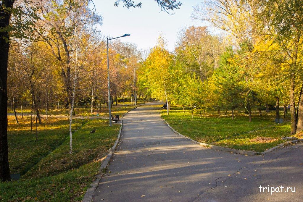 Аллея для прогулок