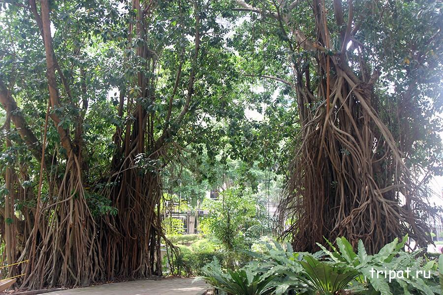 Сказочные деревья в парке