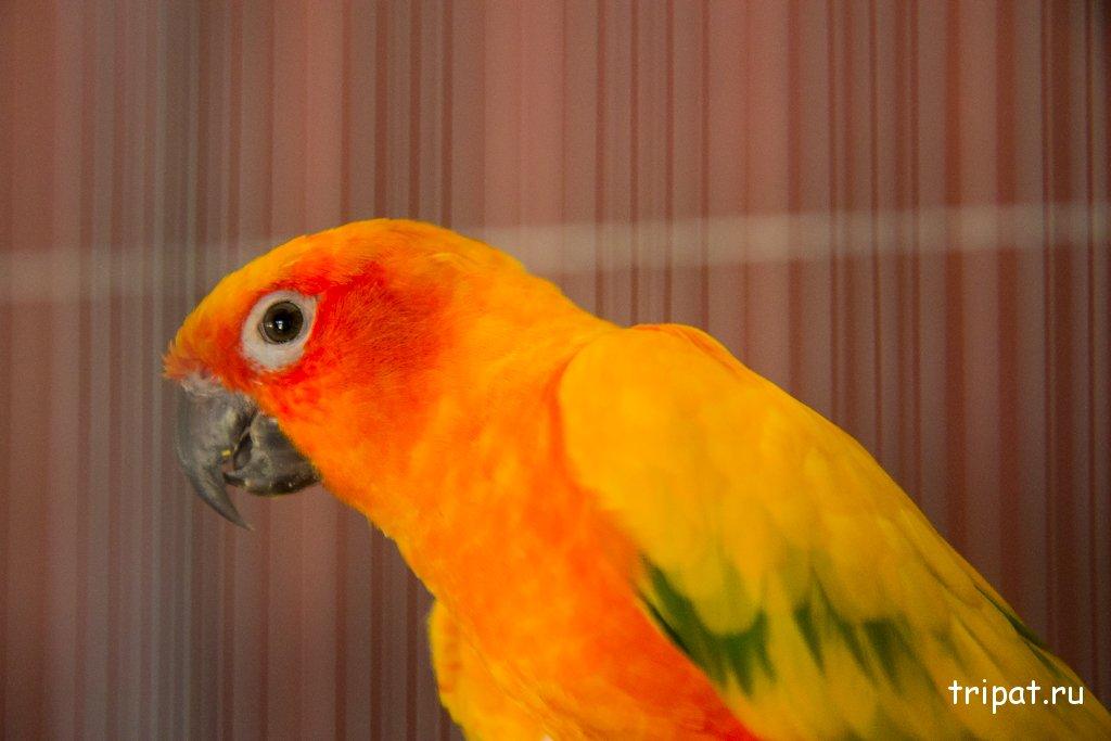 Оранжевый попугай