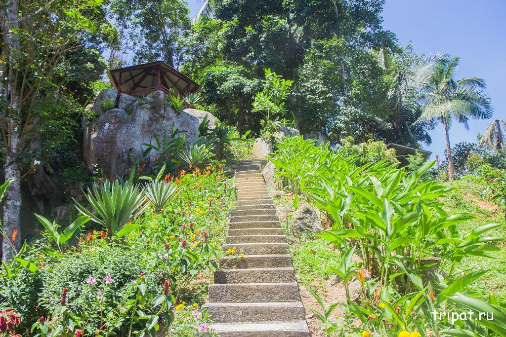 Спуск и лестница