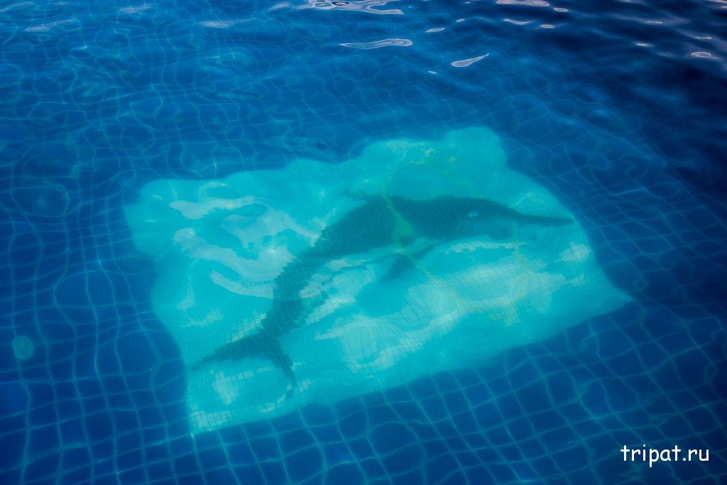 Дельфинчик на дне