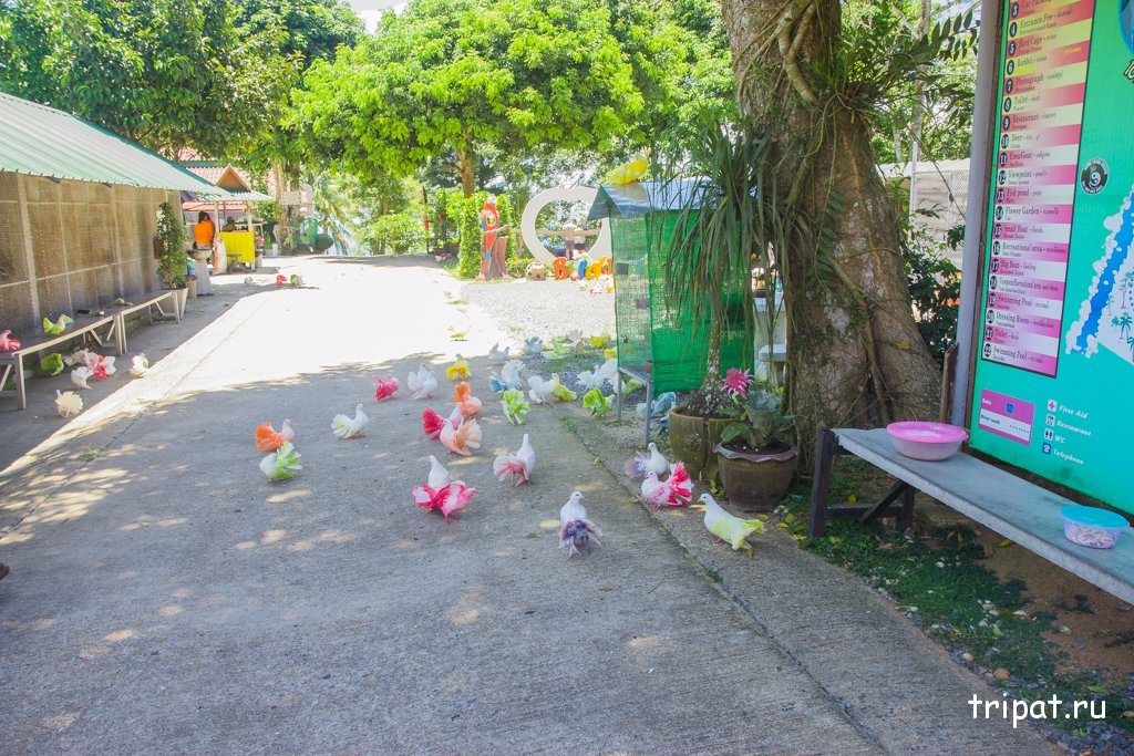 голуби на дороге