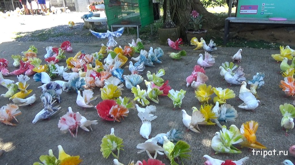 Много разноцветных голубей