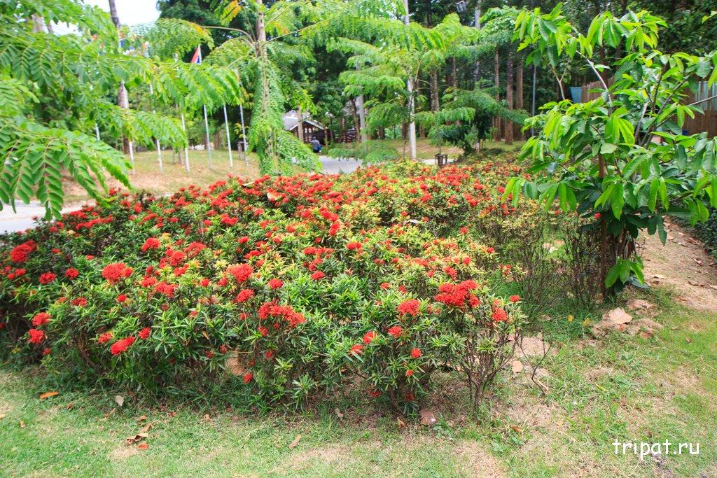 Посещение Namuang Safari Park на острове Самуи